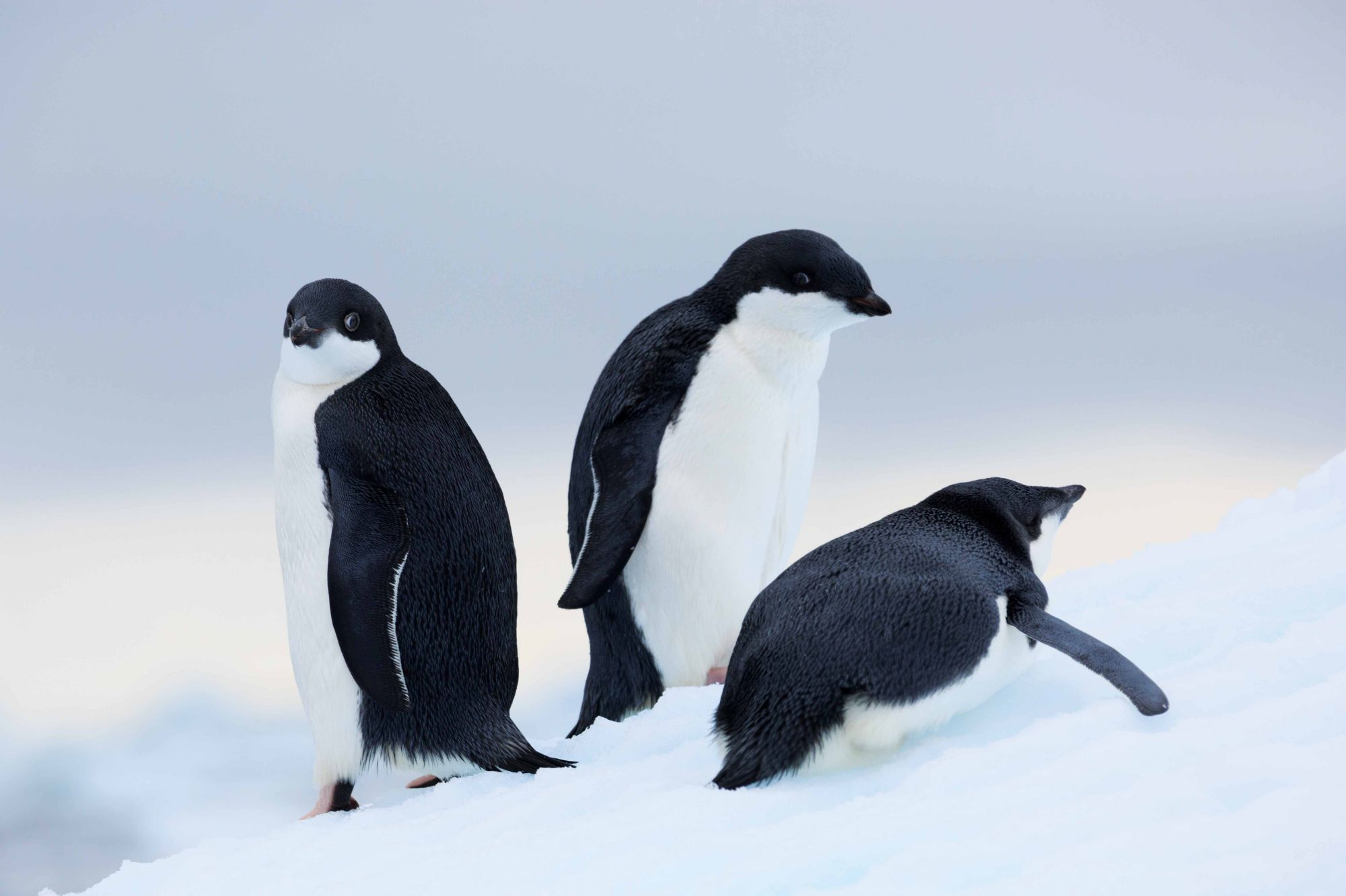 Why Antarctica Should Be Next On Your Travel Bucket List