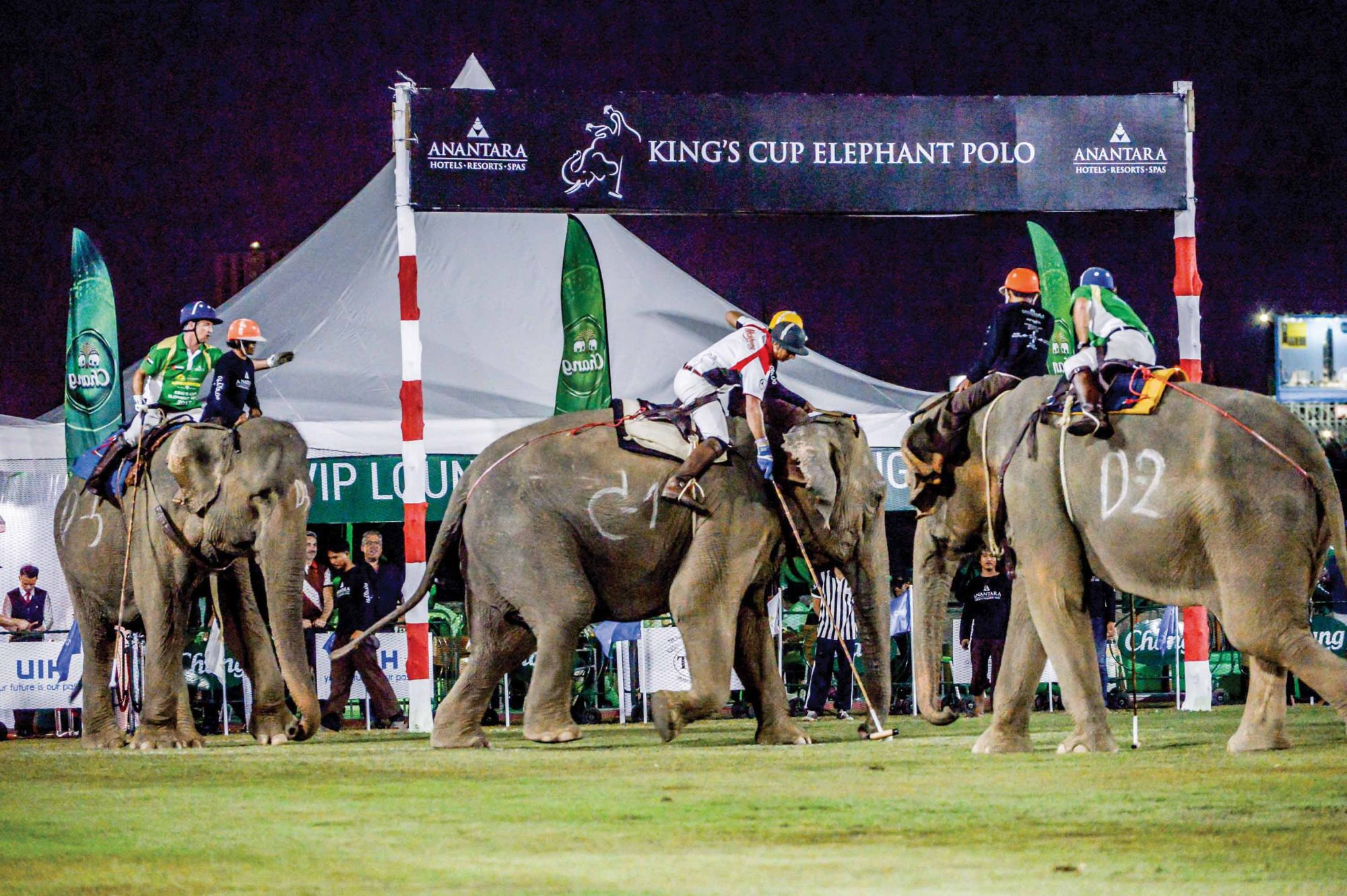 What Happens At An Elephant Polo Tournament
