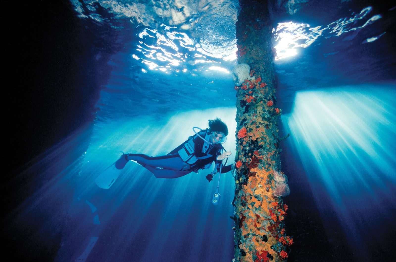 How Rolex Testimonee Sylvia Earle Plans To Save The Ocean One Hope Spot At A Time