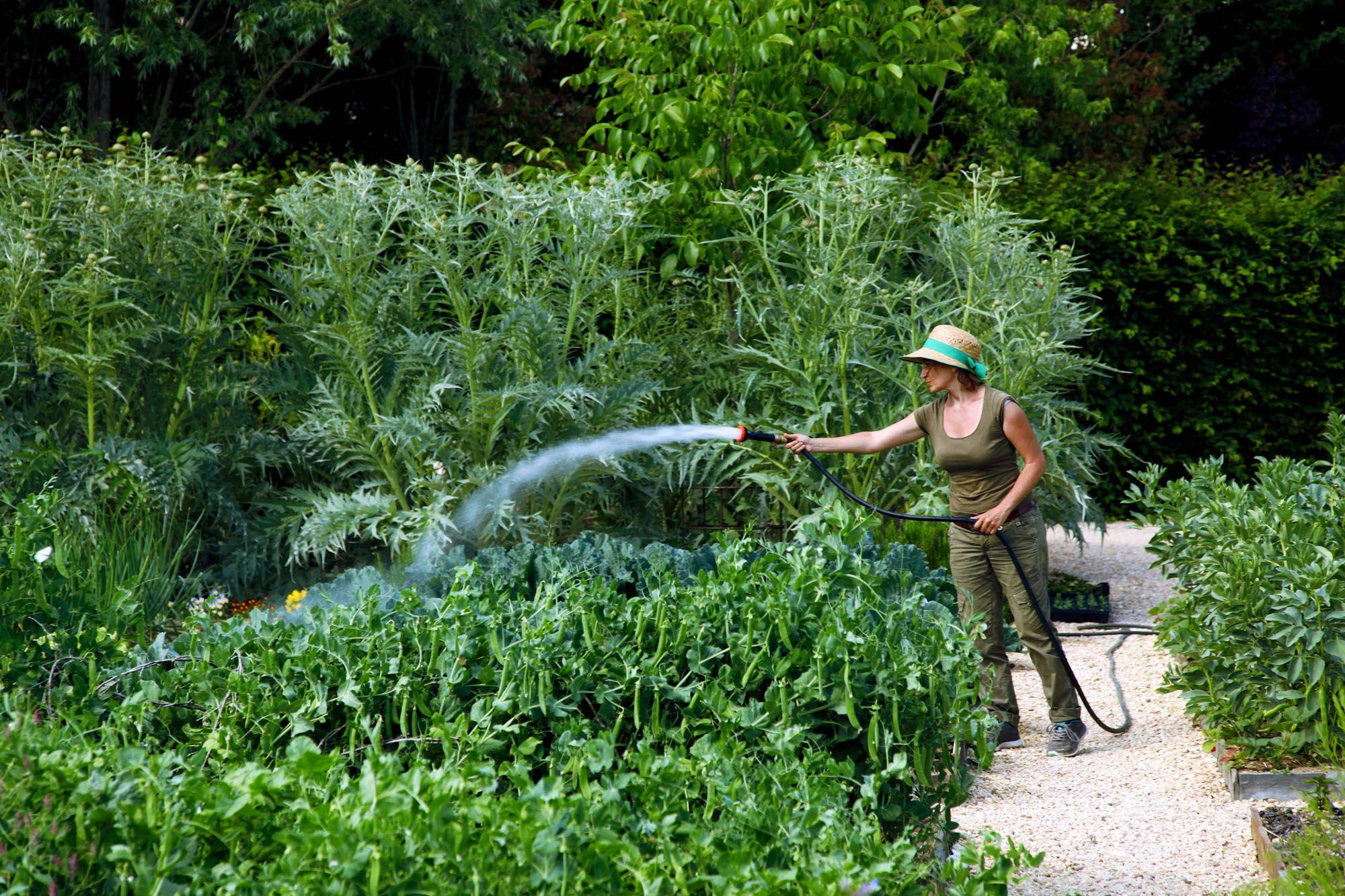 Khu vườn ẩm thực của điền trang có rau, thảo mộc và hoa ăn được sử dụng trong nhà hàng của họ