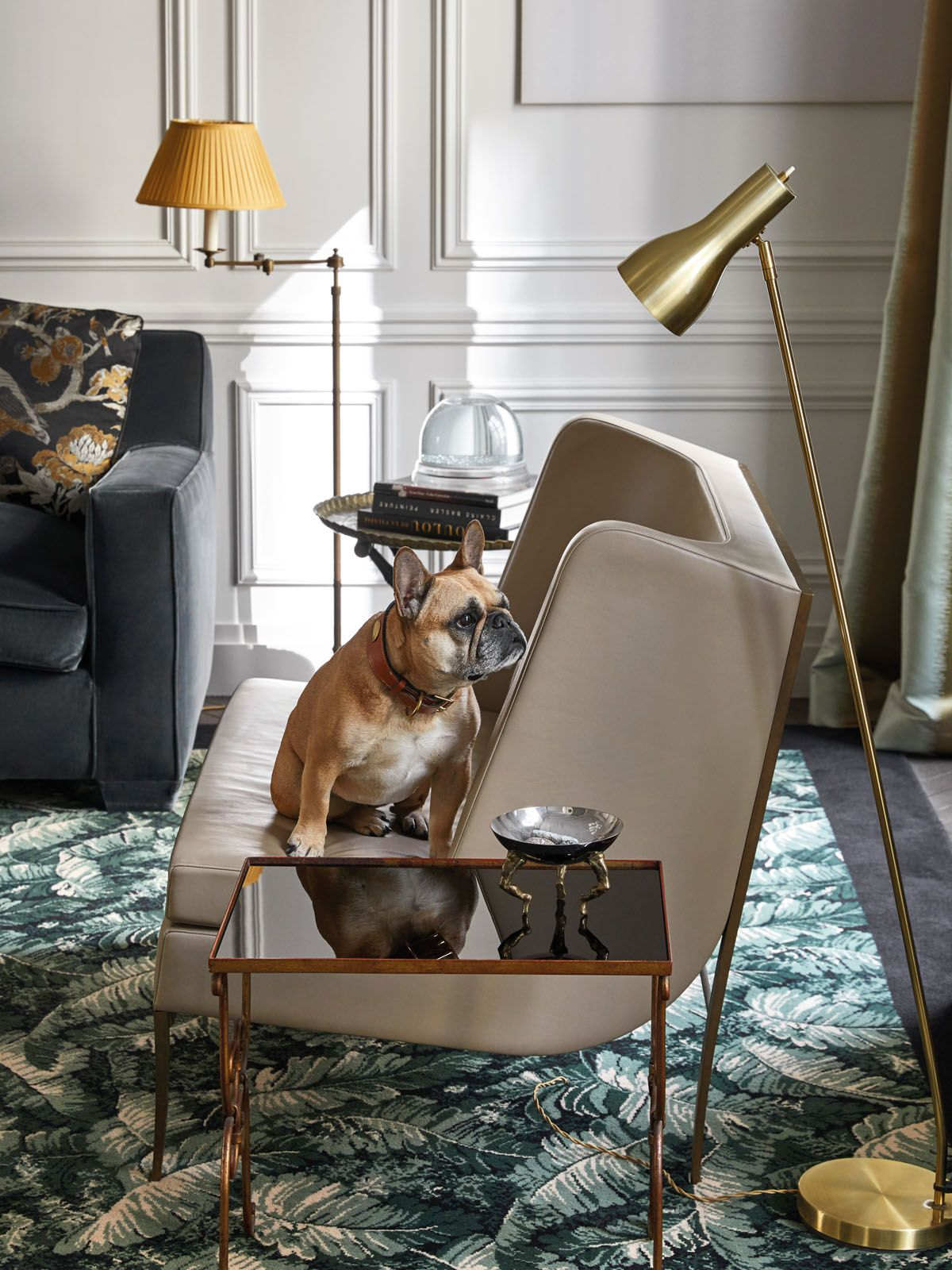 The family dog sits on an armchair in the living room