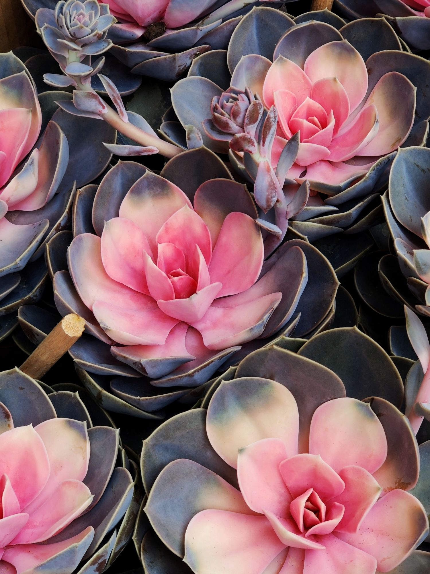 These are the 10 Most Popular Houseplants on Instagram