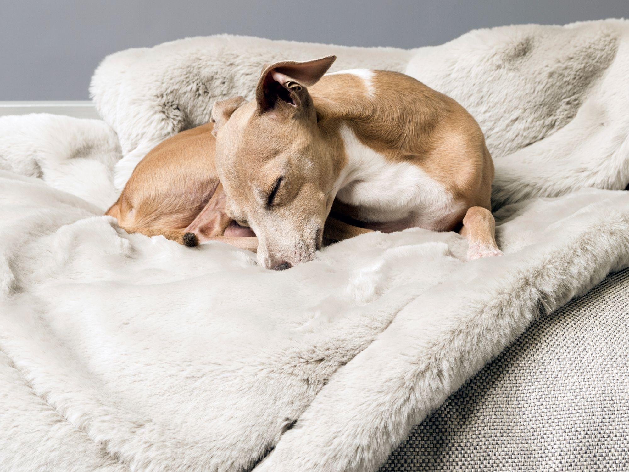 Charley Chau faux-fur dog blanket, available from charleychau.com