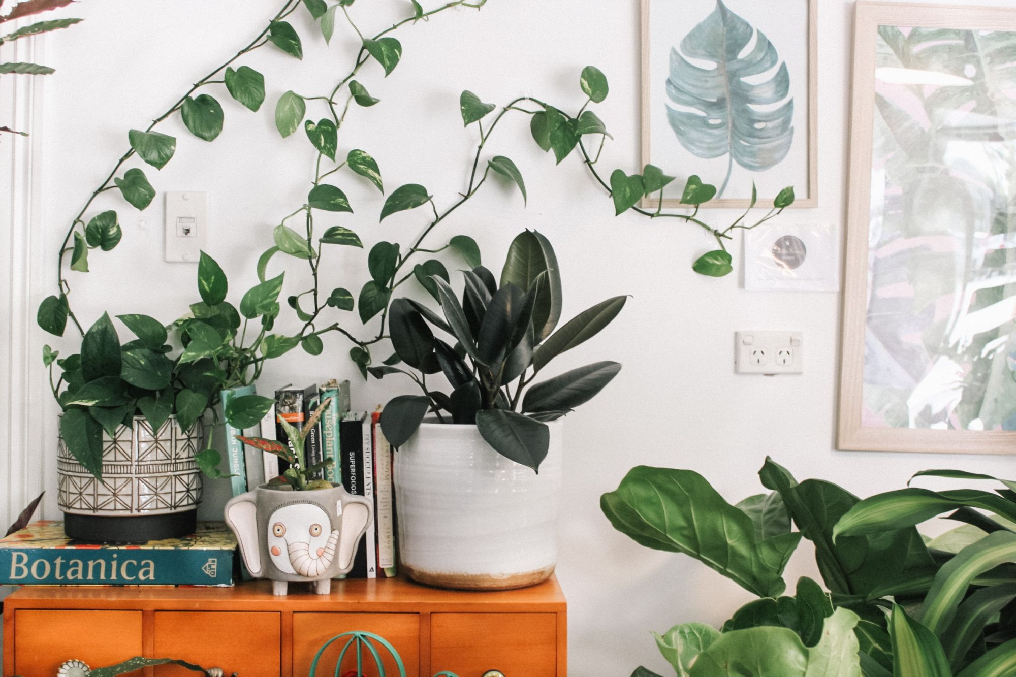 Embrace Your Inner Plant Lady With These Local Suppliers