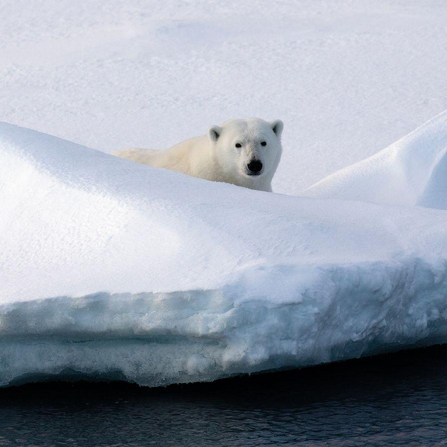 極凍北國風光