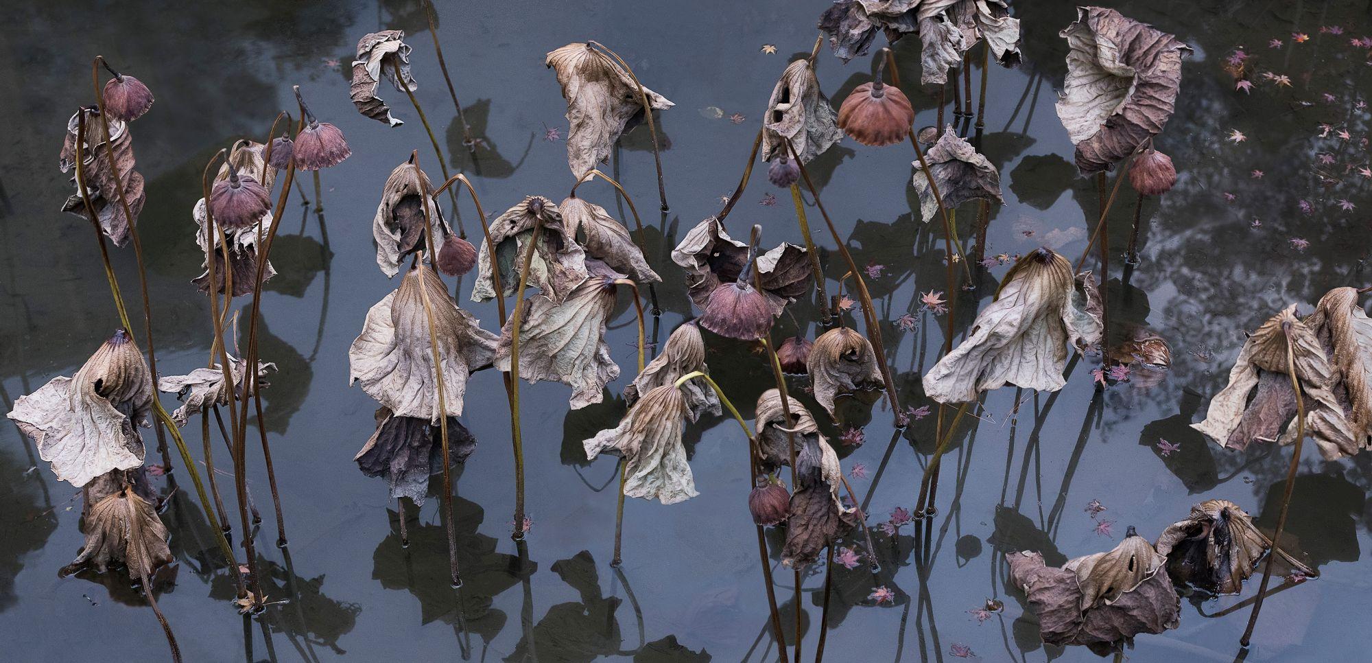 雲門藝廊展出林百里攝影作品《留得殘荷聽雨聲》
