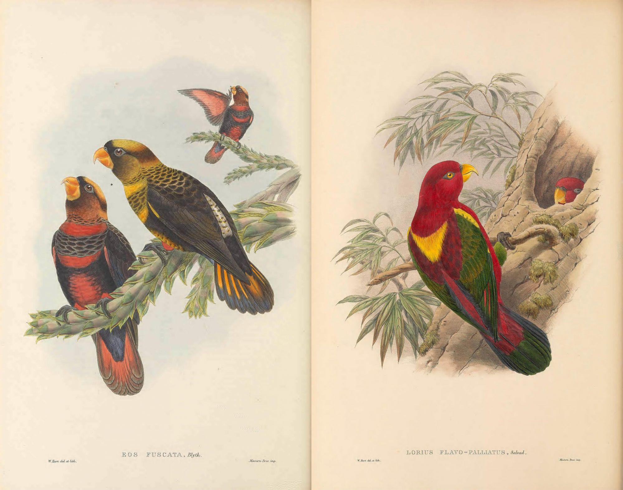 15萬張手繪「動植物圖鑑」免費下載!生物多樣性圖書館提供部分免費商業使用