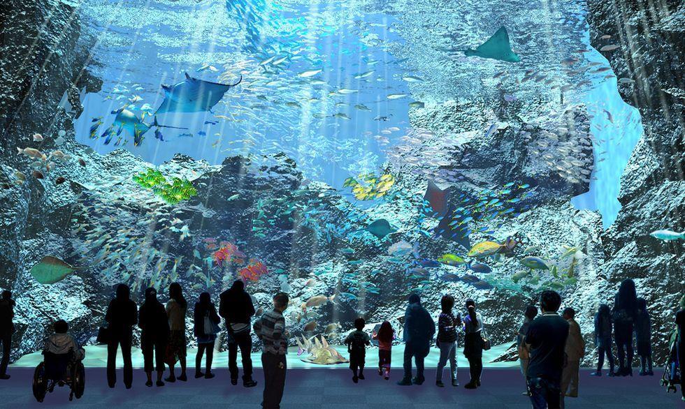 北台灣最大水族館「桃園Xpark」即將開幕!4500坪大型佔地、13種特色展區,還有企鵝陪你喝下午茶?