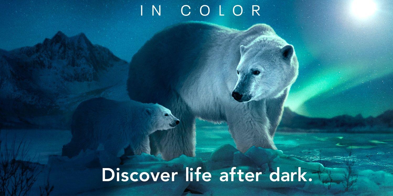 2021 世界地球日看這 3 部紀錄片和影集認識大自然