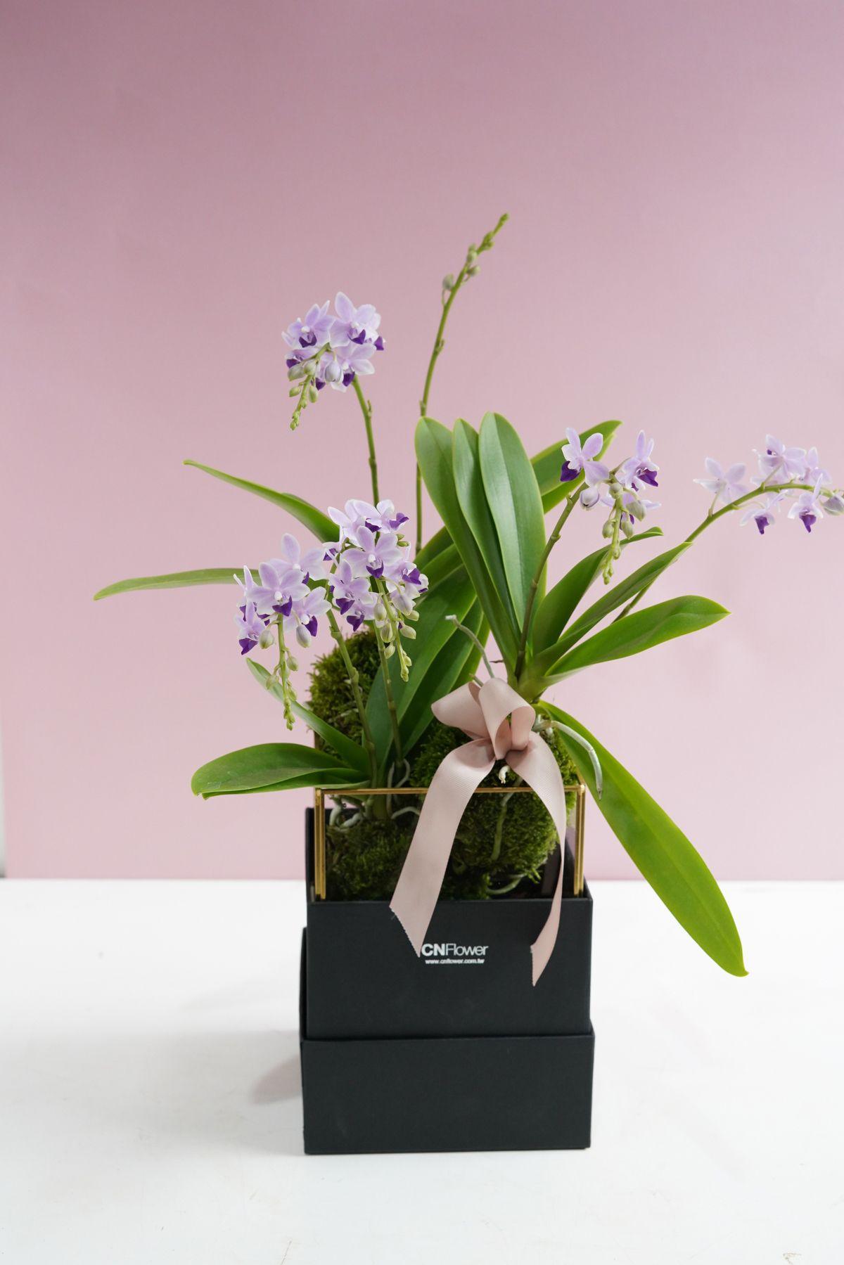 紫朵麗 金框禮盒組。