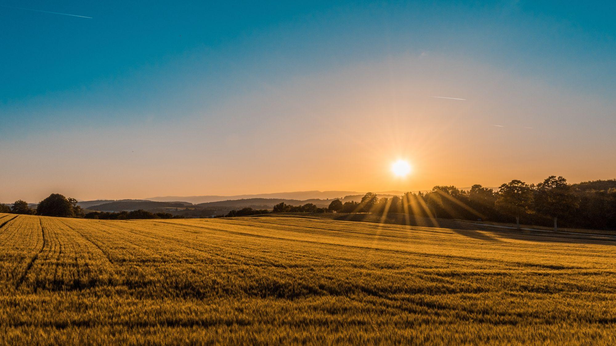小暑是夏至到大暑之間的節氣。(Photo by Federico Respini on Unsplash)