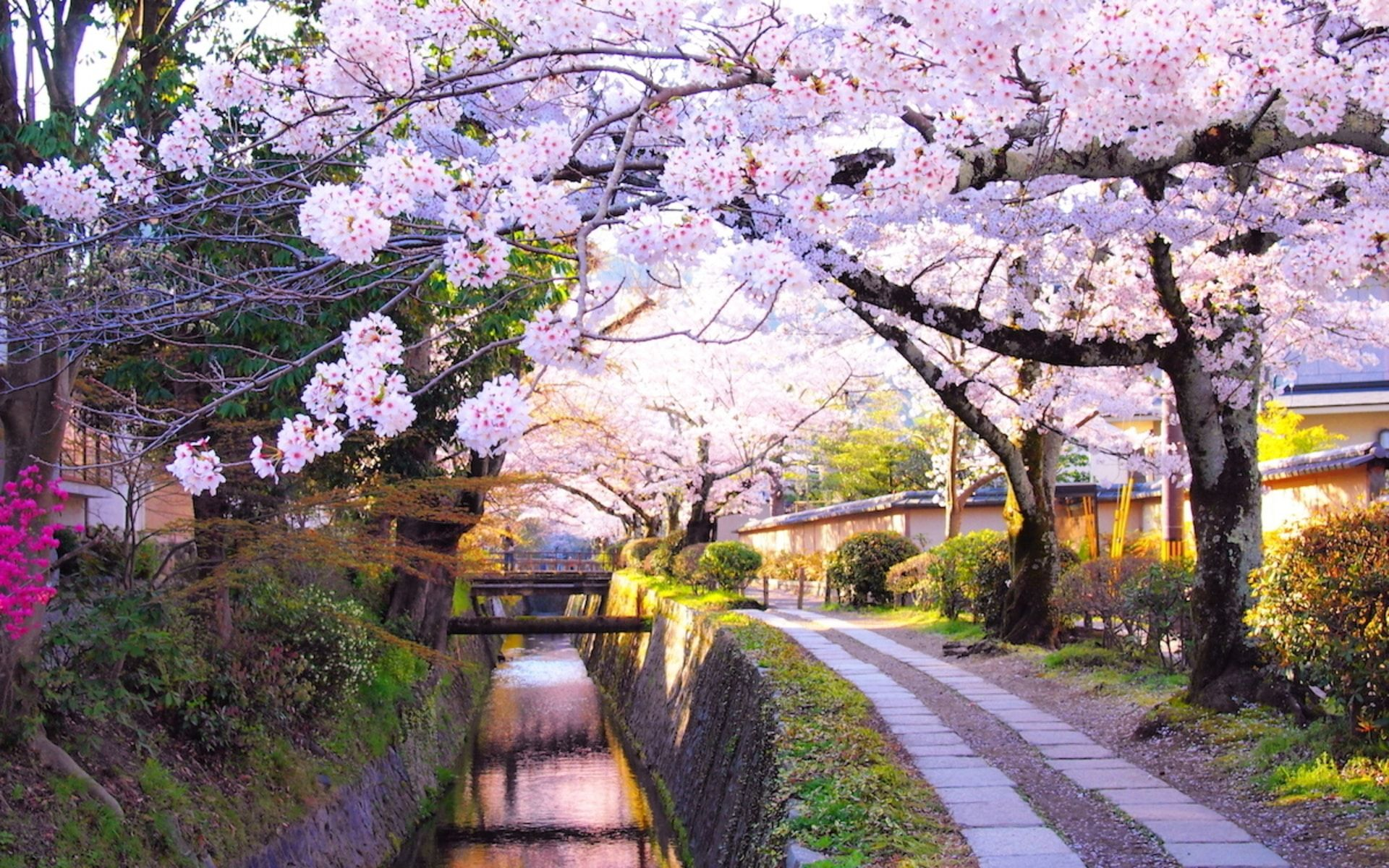 Sakura Season When And Where To See Japan S Cherry