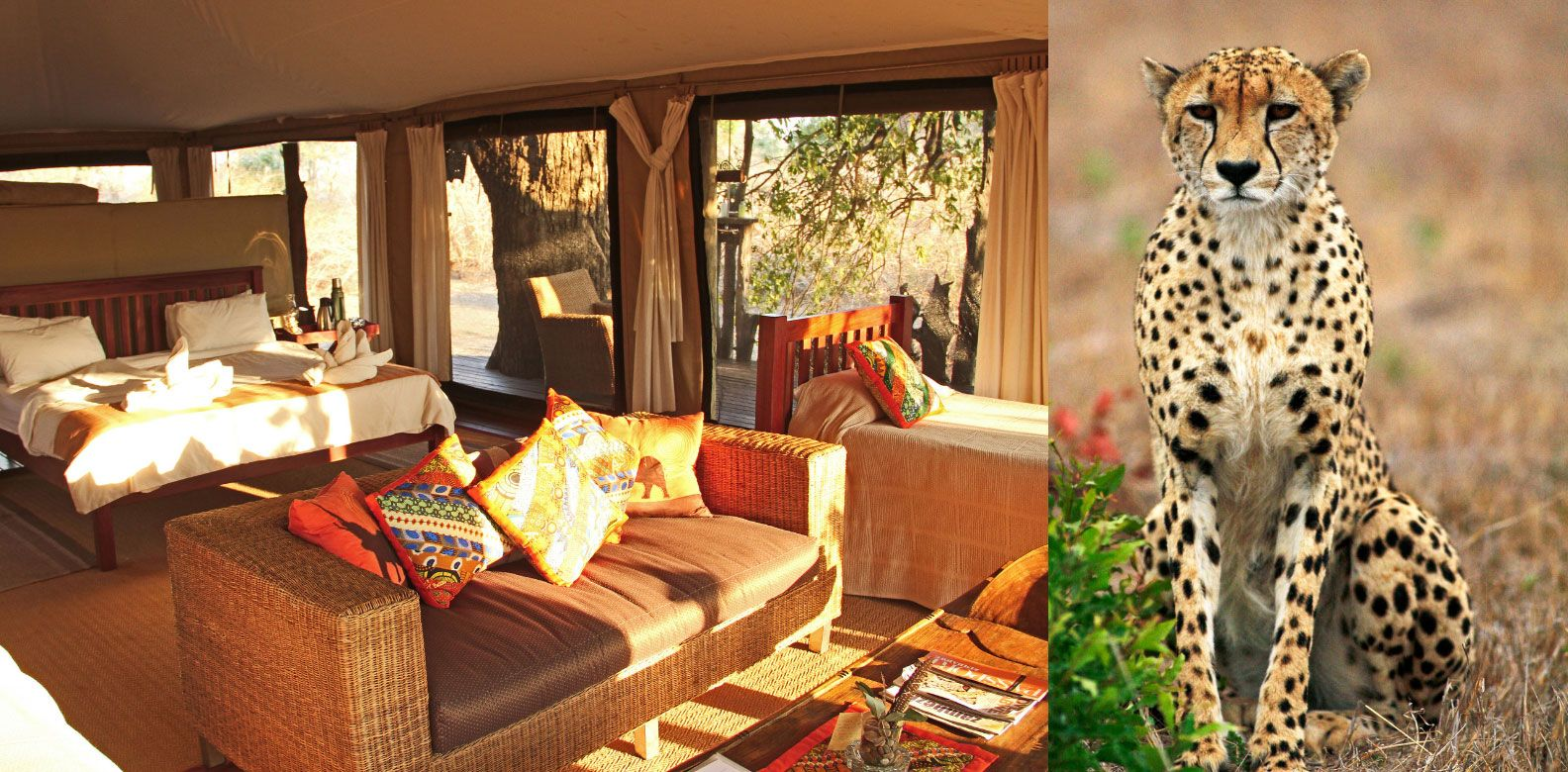 Wildlife Spotting & Glamping On These South African Safaris