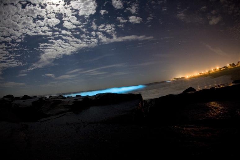 Bioluminescent_dinoflagellates.jpg