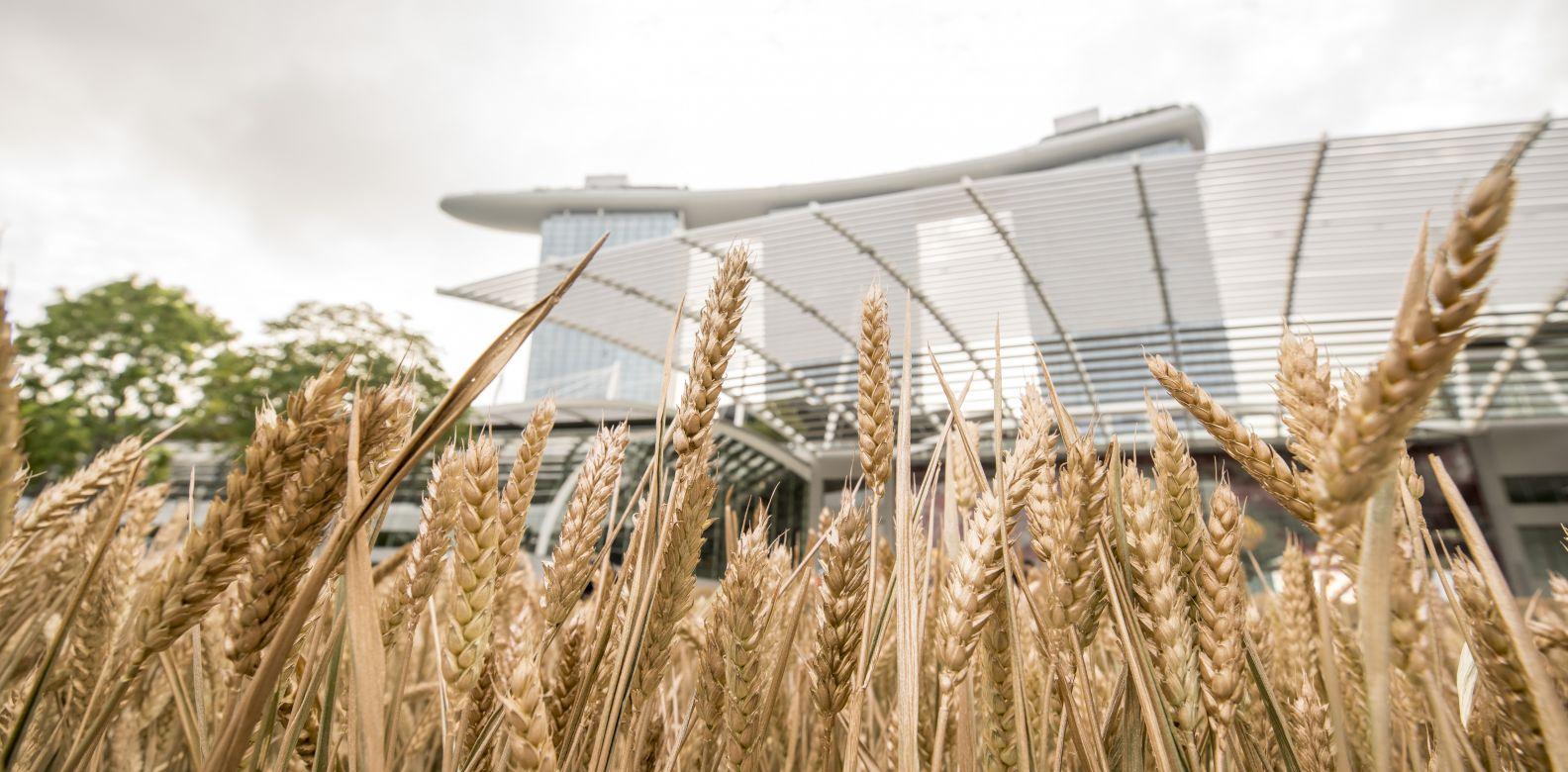 Fields Of Gold Les Bles De Chanel Transforms Marina Bay Sands