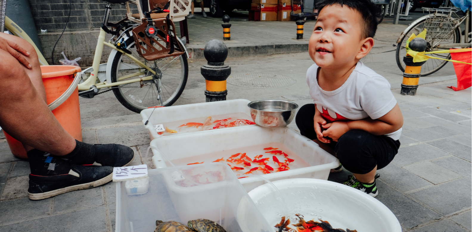 Boy in front of street-side pet stall selling fishes and terapins in Beijing