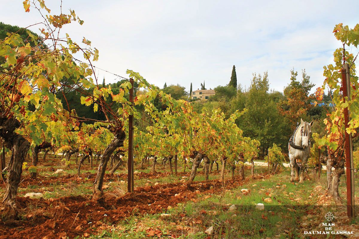 Is Languedoc The New Bordeaux Or Burgundy Of France?