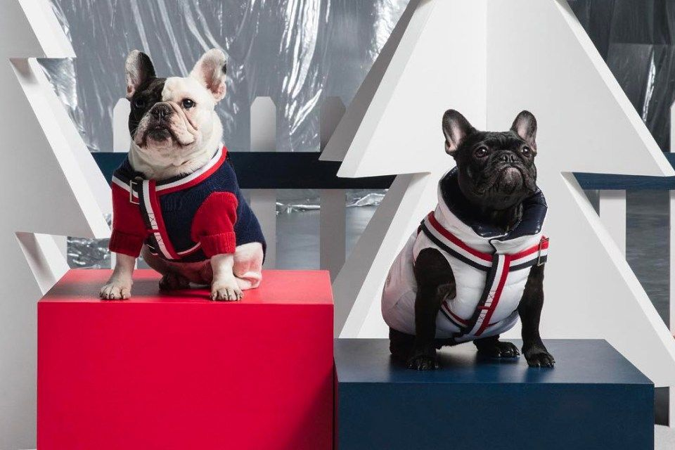 Moncler Relaunches Their Iconic Padded Jacket For Dogs