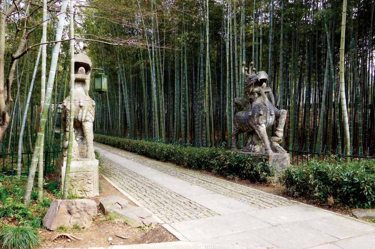 Bamboo-lined path at Yunqi