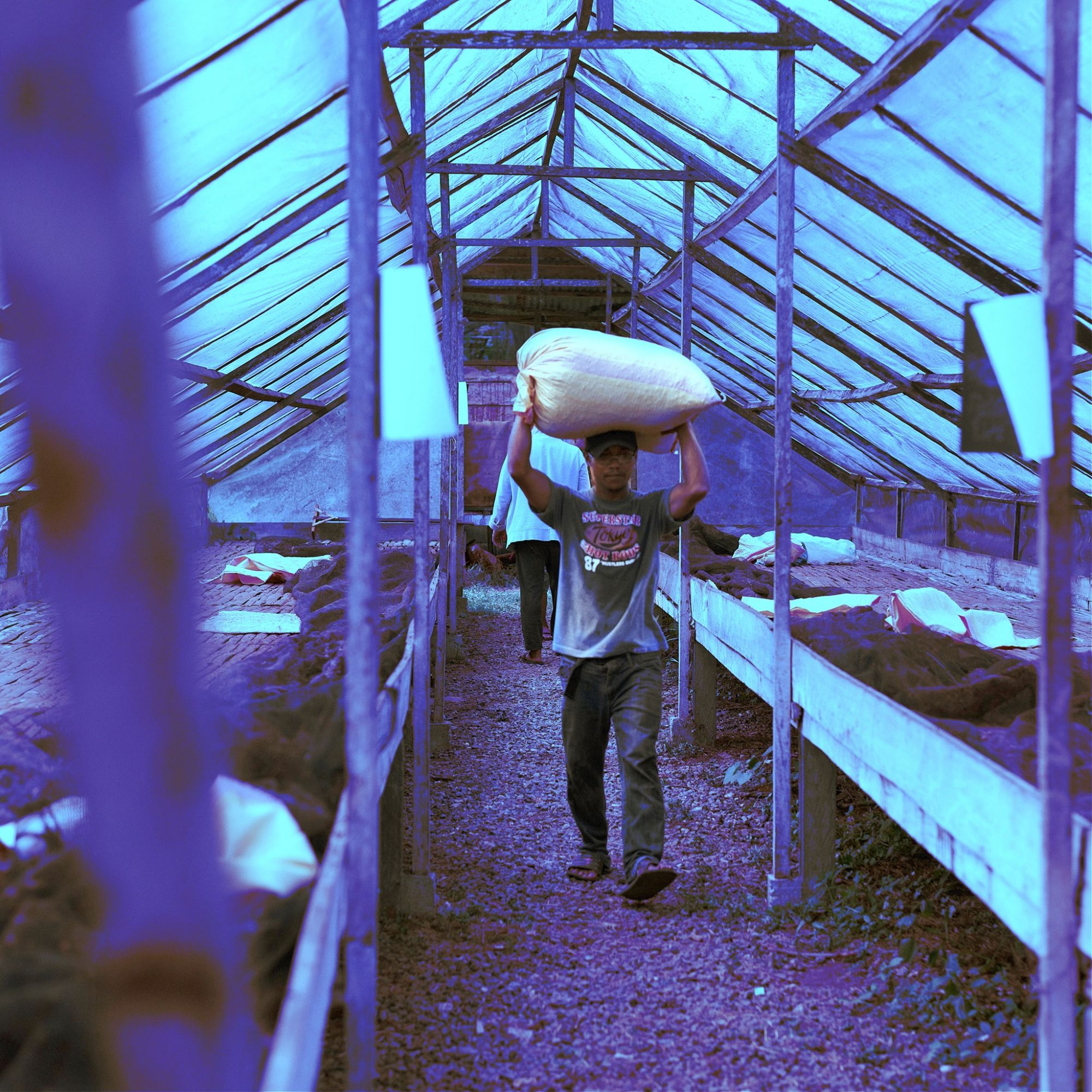How Social Enterprise Auro Chocolate Is Empowering Farmers In The Philippines